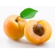 Apricot (Абрикос) - [Xi'an Taima]